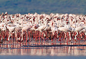 BRD 11 MH0013 01