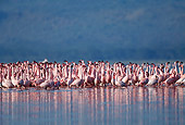BRD 11 MH0016 01