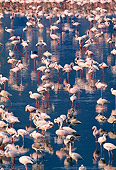 BRD 11 MH0017 01