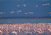 BRD 11 MH0018 01