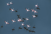 BRD 11 MH0024 01