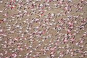 BRD 11 MH0031 01