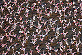 BRD 11 MH0045 01