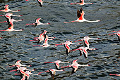 BRD 11 MH0048 01