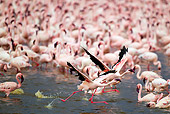 BRD 11 MH0049 01