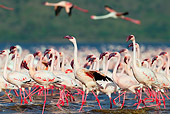 BRD 11 MH0050 01