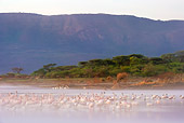 BRD 11 MH0052 01