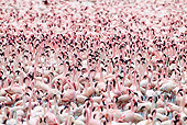 BRD 11 MH0054 01