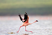 BRD 11 MH0057 01