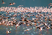 BRD 11 MH0058 01