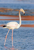 BRD 11 WF0001 01