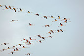 BRD 11 WF0002 01