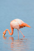 BRD 11 NE0003 01