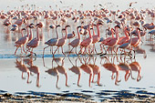 BRD 11 NE0006 01