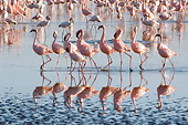 BRD 11 NE0007 01