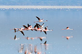 BRD 11 NE0009 01