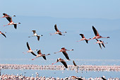 BRD 11 NE0010 01