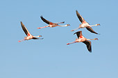 BRD 11 NE0012 01