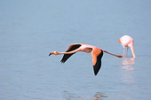 BRD 11 NE0013 01