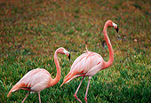 BRD 11 RK0009 01