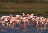 BRD 11 TL0001 01