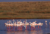 BRD 11 TL0002 01