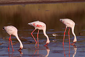 BRD 11 TL0004 01