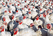 BRD 12 LS0002 01