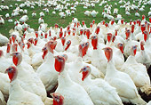 BRD 12 RC0001 01
