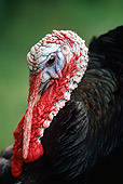 BRD 12 RK0004 02