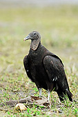BRD 13 AC0057 01