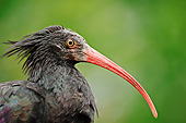 BRD 13 AC0059 01