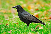 BRD 13 AC0060 01