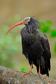BRD 13 AC0063 01