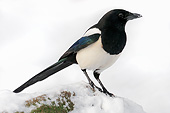 BRD 13 AC0067 01