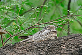 BRD 13 AC0070 01