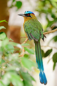 BRD 13 AC0072 01