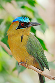 BRD 13 AC0073 01