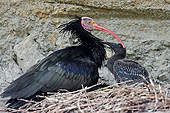 BRD 13 AC0074 01