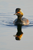 BRD 13 AC0079 01