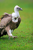 BRD 13 AC0080 01