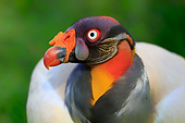 BRD 13 AC0083 01