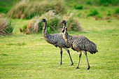 BRD 13 AC0088 01