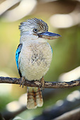 BRD 13 AC0095 01