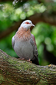 BRD 13 AC0098 01