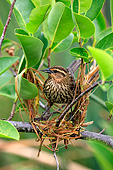 BRD 13 AC0103 01