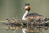 BRD 13 AC0105 01