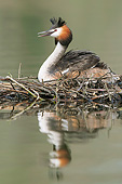 BRD 13 AC0106 01