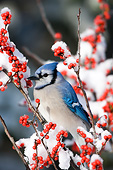 BRD 13 DA0011 01