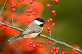 BRD 13 DA0015 01